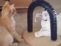 Kiedy jeden z twoich kotów jest dupkiem