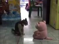 Nie igraj ze wściekłym kotem
