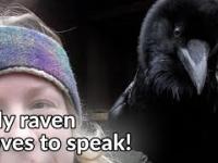 Czy wiesz, że Kruki mogą gadać?!