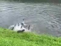 Nielegalna ustawka wydr