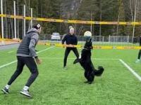 Piesek, który potrafi grać w siatkówkę!