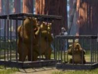 Co się stało z mamą misia w Shreku?