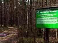 TVP o zamknięciu lasów