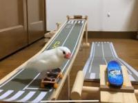 Ptaszek szaleje na deskorolce