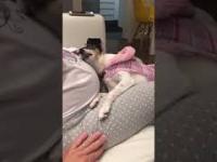 Miłość psa do kobiety w ciąży i dziecka