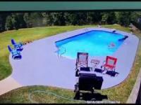 Alabama. Dwa psy ścigają krowę ta wpada do basenu, a później przychodzi on...