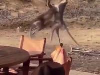 Bitka w australijskim barze