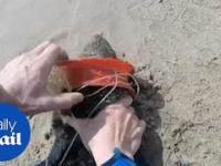 Ratowanie uchatki
