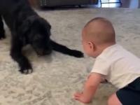 Dzieciak i piesek, najlepsi przyjaciele