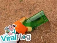 Humanitarna pułapka dla gryzoni