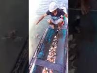 Łowienie  piranii