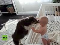 Pies uspokaja płaczącego bobasa
