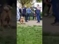 Interwencja Policji w Katowicach