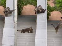 Kot pomógł kotkowi zbliżyć się do krewnych, czyli nigdy nie zostawiamy własnych
