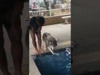 Husky - pierwszy raz na głęboką wodę na basenie