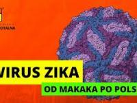 WIRUS ZIKA - OD MAKAKÓW DO POLSKI?