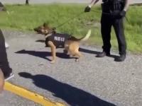 Bliskie spotkanie psa policyjnego z jednym z członkiem antify