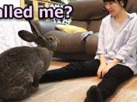 Pani karmi swojego mega giga zająca, znaczy królika
