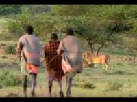 Afroamerykanie przywłaszczają sobie obiad lwu