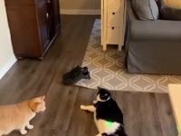Ten kot dobrze wie, kiedy trzeb przestać