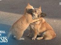 Kot pociesza porzuconego na ulicy psa