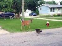 Jelonek spotyka kotka, kotek spotyka jelonka
