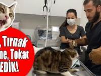 Słodziutki kotek u weterynarza. Może ktoś chce pogłaskać?