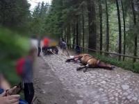 Koń padł z wycieńczenia, a dorożkarz go bije i zaprzęga z powrotem do pracy