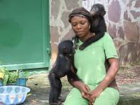 Młody szympans karłowaty daje buziaka przybranej mamie