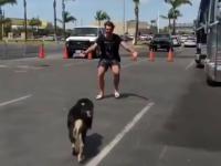 Radosne przywitanie człowieka przez psa