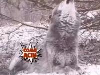 Jak wywołać wilka z lasu?