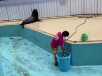 Bawiące się foczki w basenie
