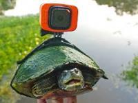 Zwiedzanie stawu z perspektywy żółwia