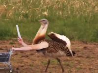 Gdyby ptaki miały rączki
