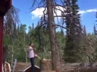 Drwal prezentuje, jak prawidłowo ścinać drzewo