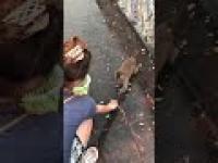 Małpce za bardzo się spieszyło