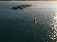 Żarłacz biały wyskoczył z wody na rekordową wysokość