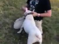 Facet wychodzi z groźnym psem bez smyczy i kagańca i bije przechodniów