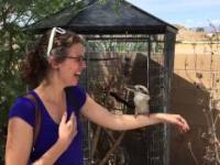 Kukabura i jej uroczy śmiech