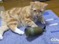 Wybuchowa zabawka dla koteczka