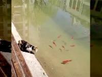 Kot złowił sobie rybkę