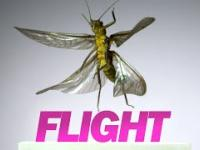 Lot owadów nagrany kamerą 3200 klatek na sekundę