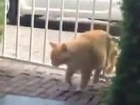 Oto kot, który obala teorię o kotach