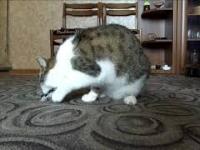 Kotka Kicia - udane polowanie