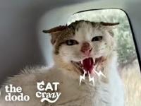 Metamorfoza dzikiego kota