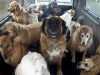 Szkoła dla psów w USA