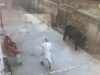 No i dziadku było warto bić byka?