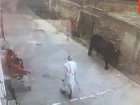 Wiejski matador