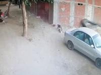 Kot ratuje dziecko, które zostało zaatakowane przez psa