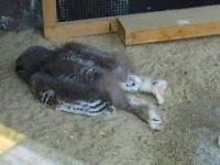 Dlaczego Sowy tak Śpią? Jak Dziwnie Śpią Różne Zwierzęta?